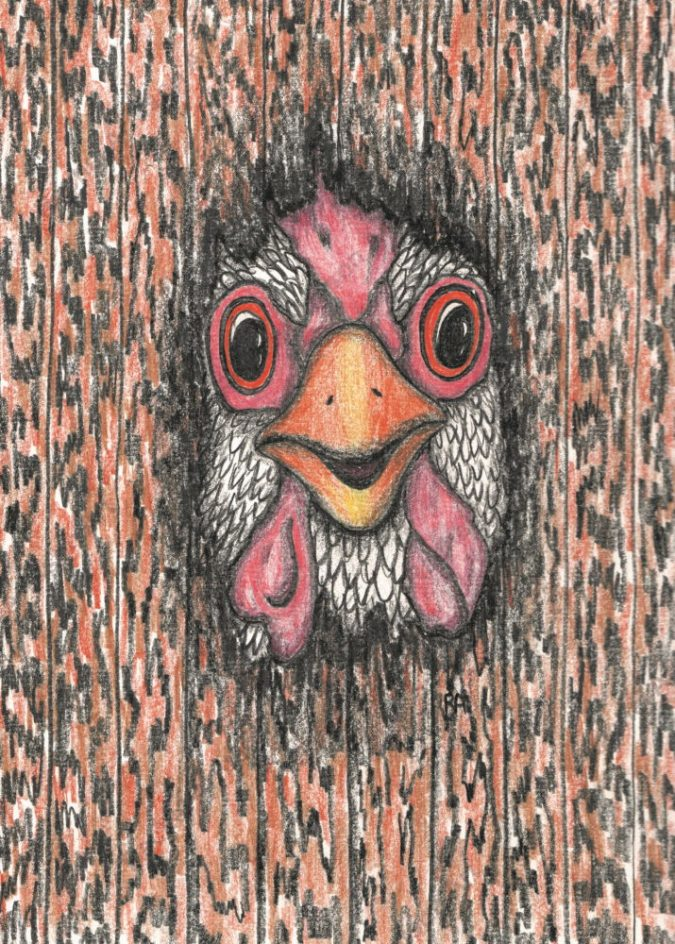 Peeking Chicken